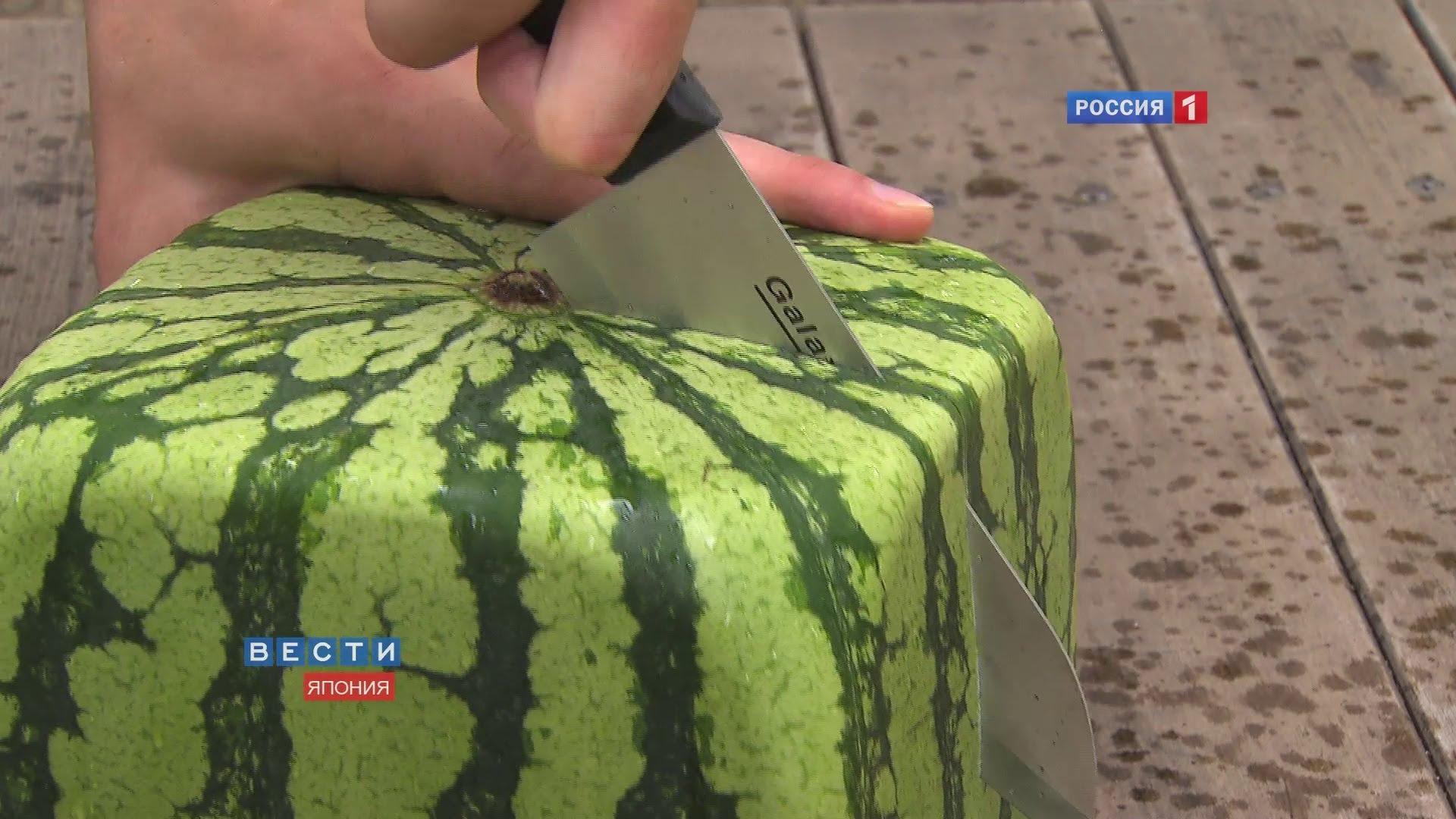 四方形西瓜 原来是这样制作的 Square watermelons Japan.